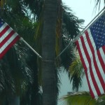 Flags-on-tree.jpg