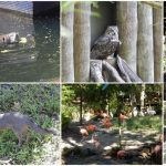 dag-6-homosassa-springs-wildlife-state-park1