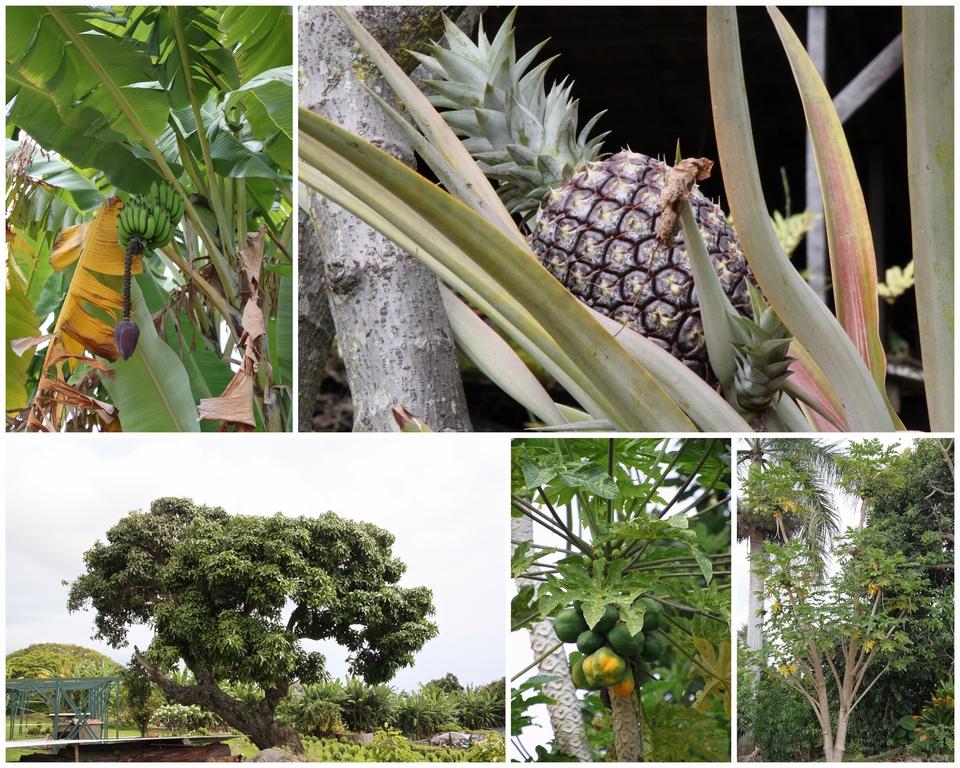 Dag 3-Oahu-Big Island-Kona-3
