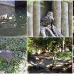 dag-6-homosassa-springs-wildlife-state-park1